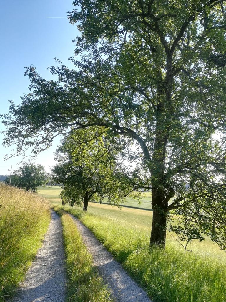 Weg-mit-Baum